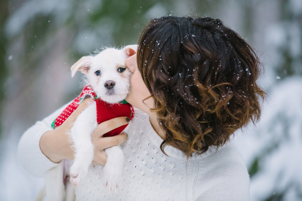 Dog and Puppy Photographer in Cleveland 05.jpg
