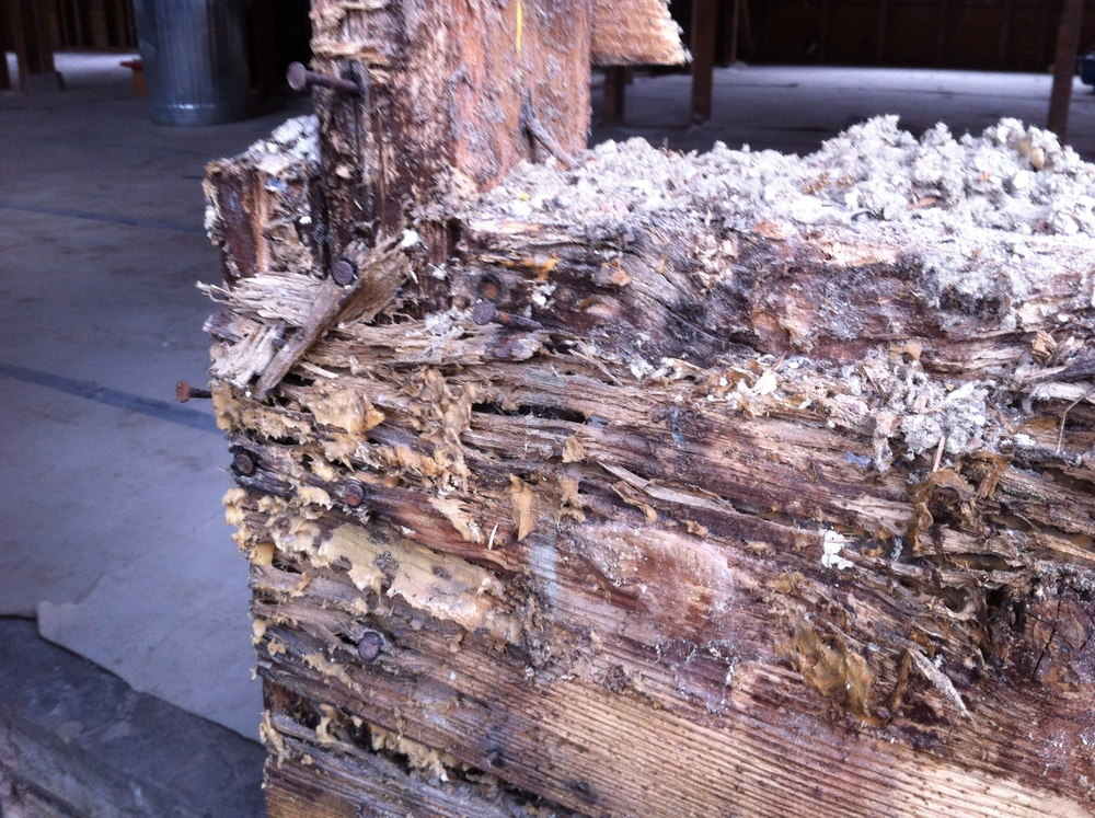 Dryrot and termites