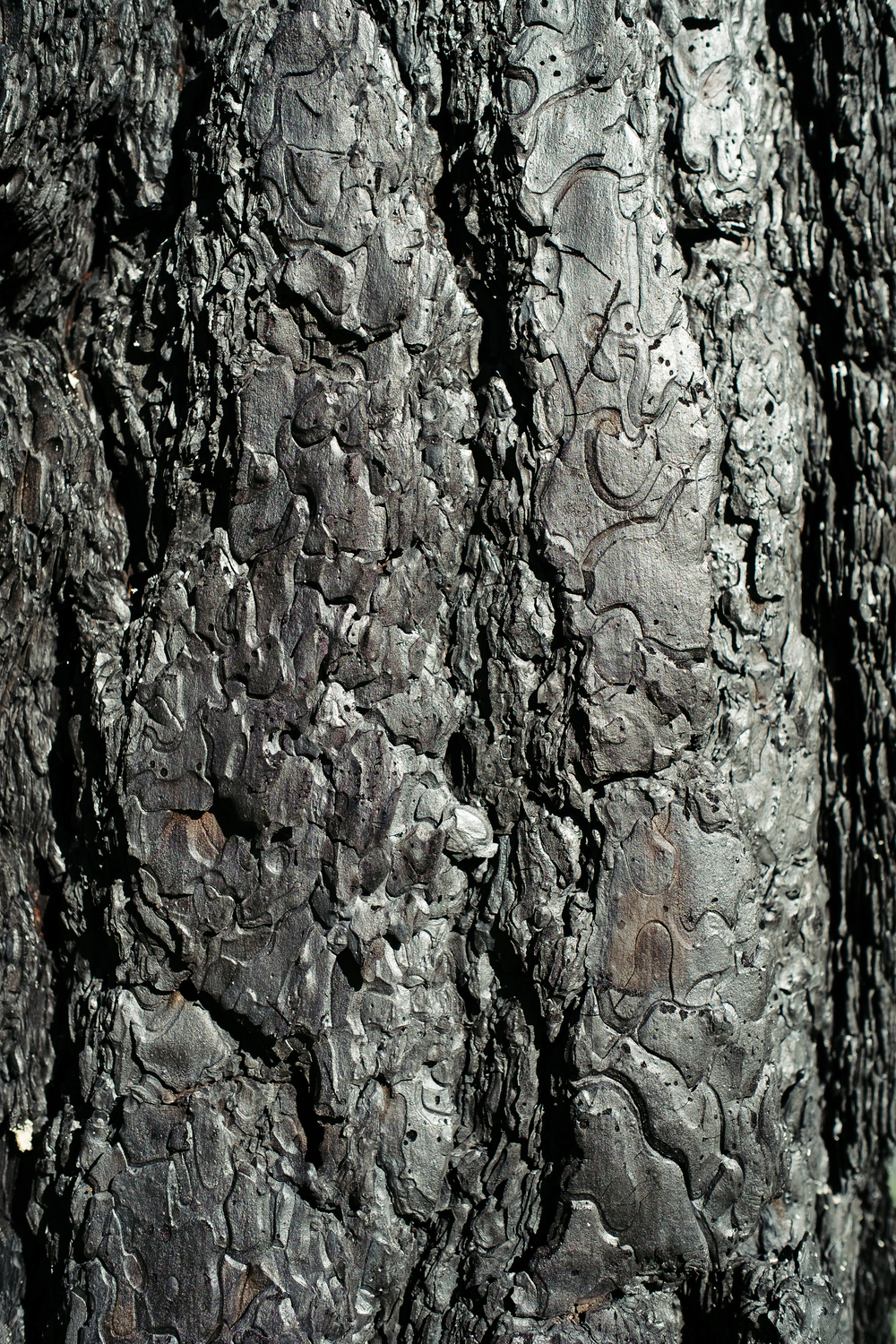Burned Bark.