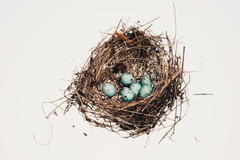 Bird_Nests-0019.jpg