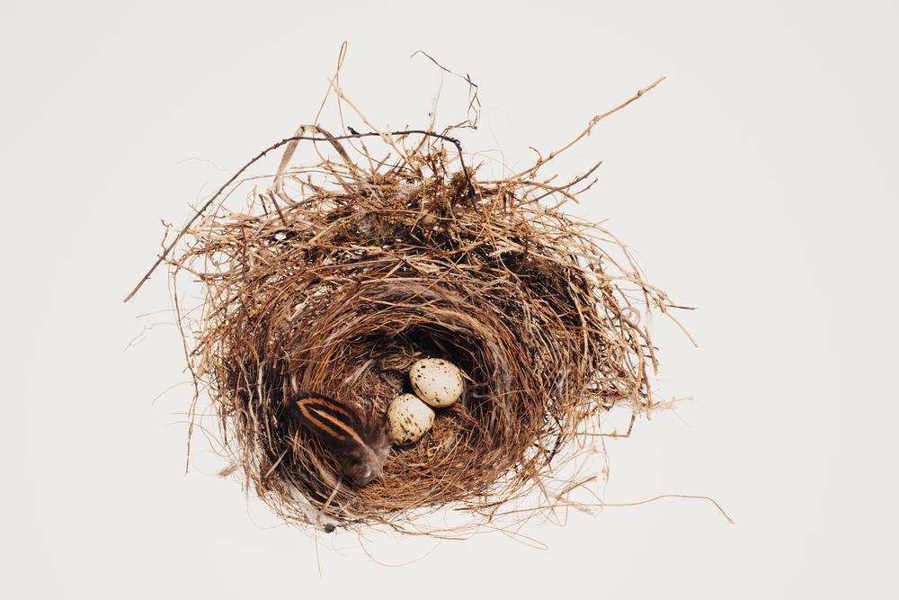 Bird_Nests-0014-2.jpg