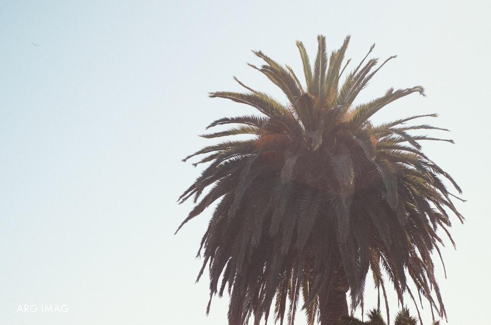 Nicki & Jay | Malibu Wedding | 4-6-13.jpg