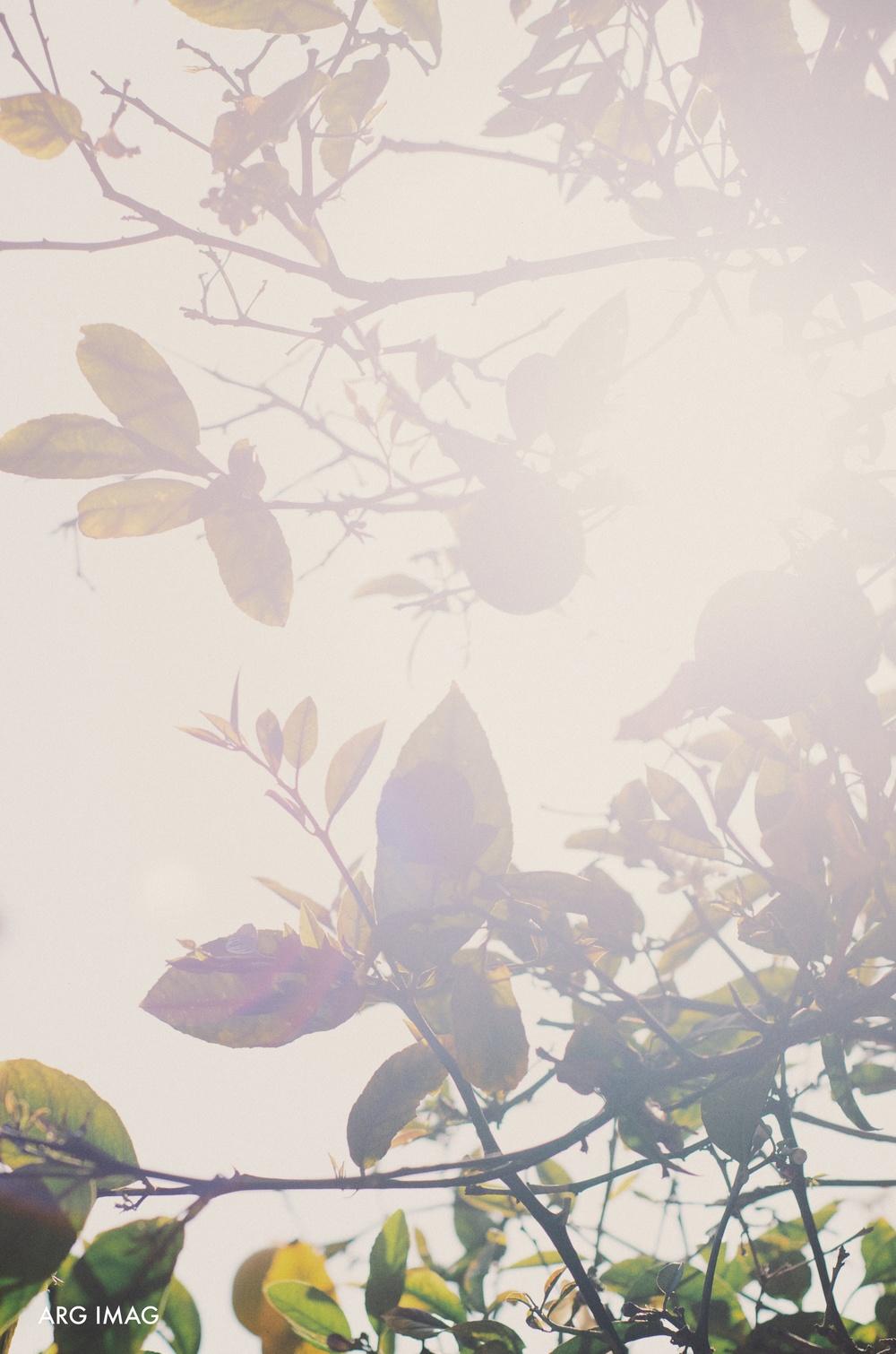 Nicki & Jay | Malibu Wedding | 4-6-13 (1).jpg
