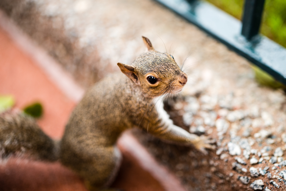 Epcot Squirrel