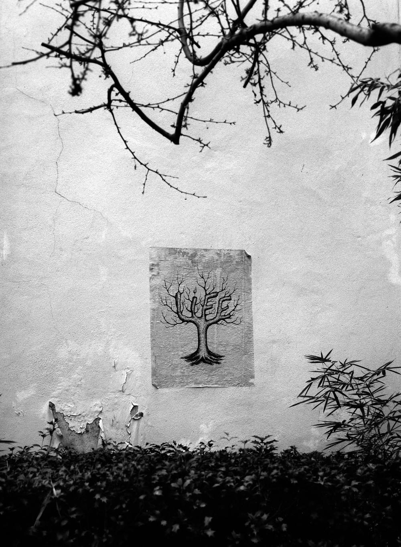 Every-tree-tells-a-story.jpg
