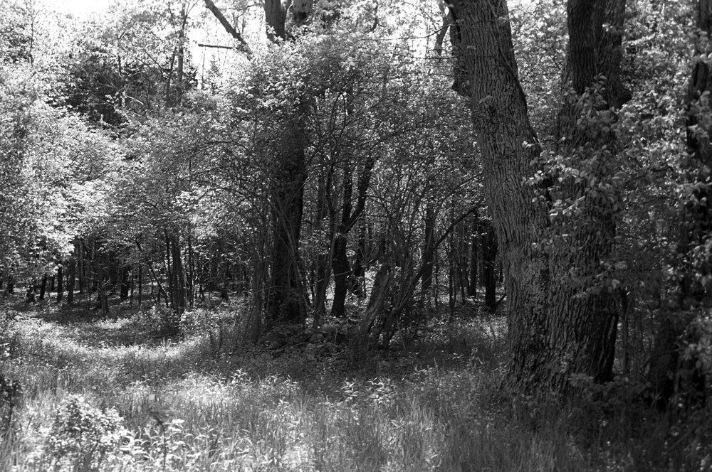 Hot-woods.jpg