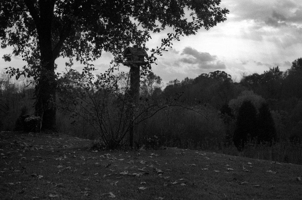 Twilight-for-our-flock.jpg