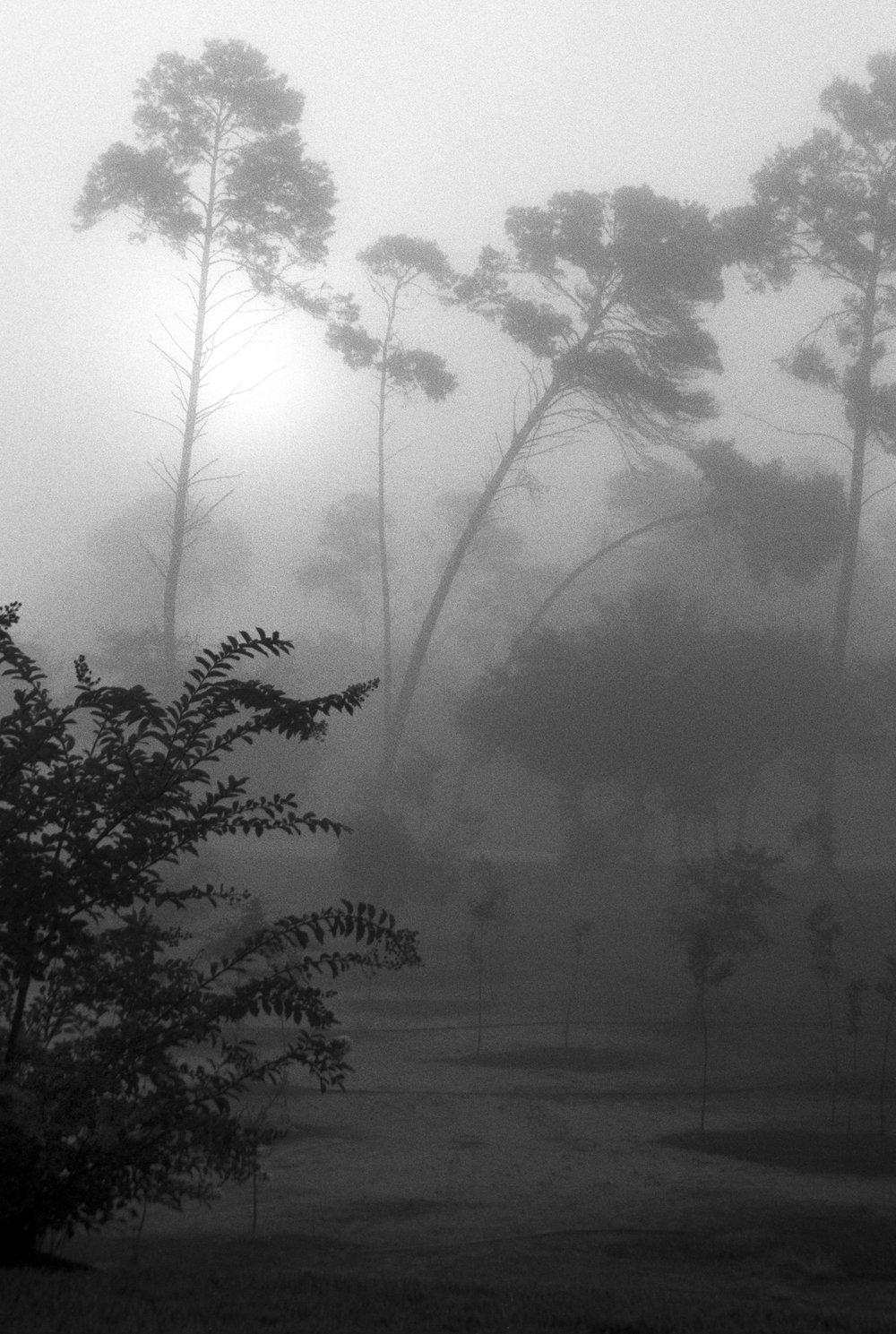Marshy-fog12_BW.jpg