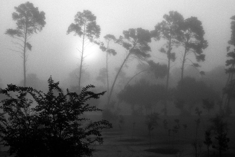 Marshy-fog15_BW.jpg