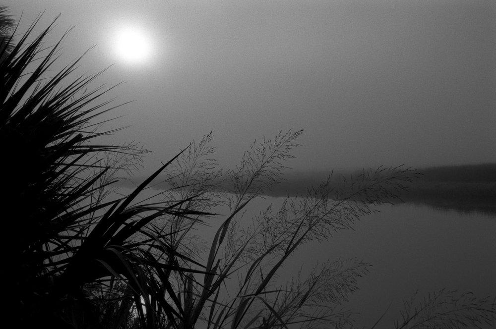 Marshy-fog18_BW.jpg