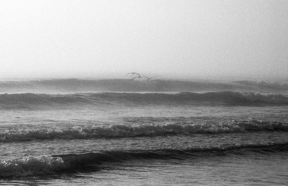 Turtle-Beach7_BW.jpg