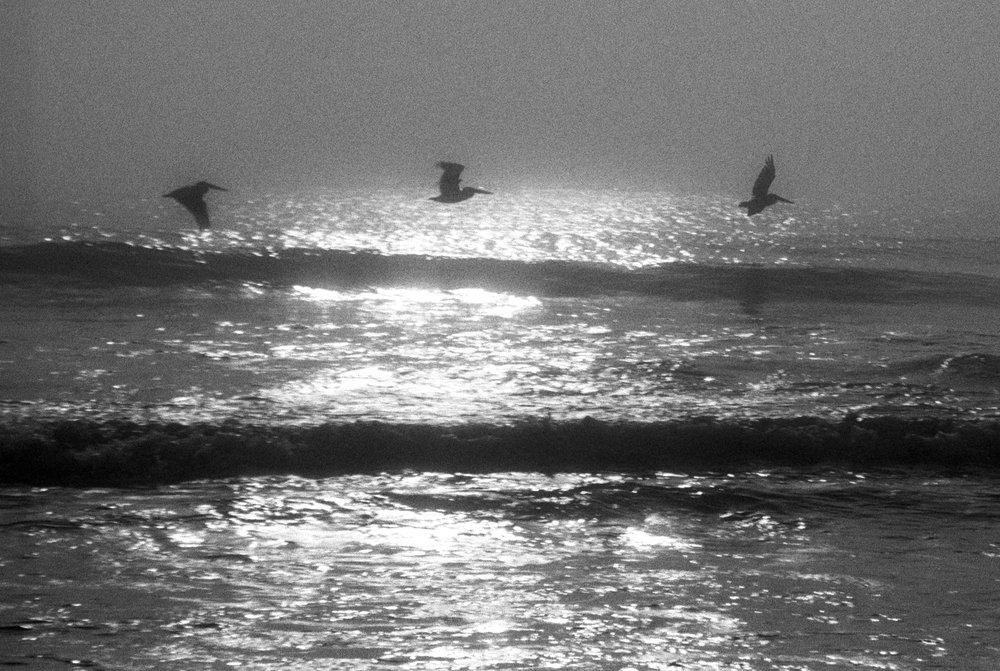 Turtle-Beach6_BW.jpg