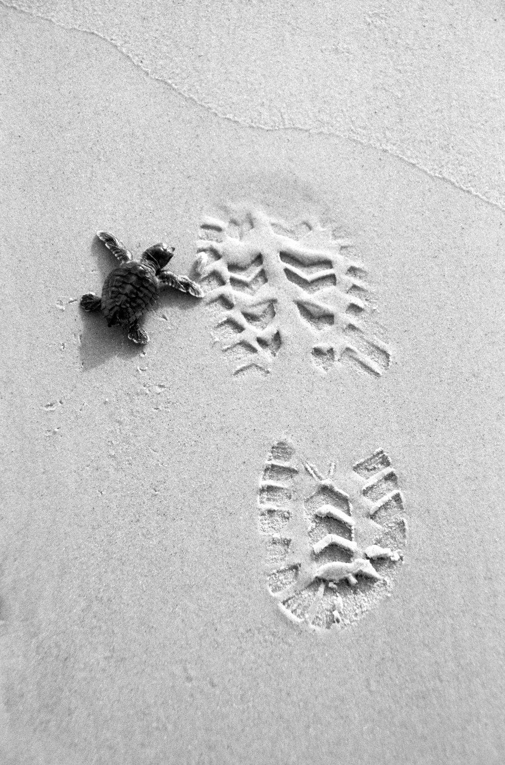 Turtle-Beach5_BW.jpg