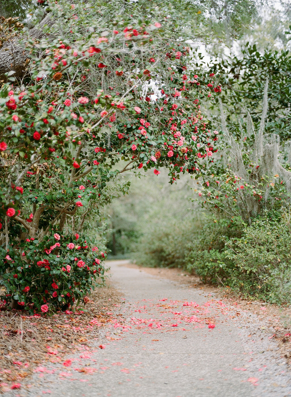 Airlie-gardens-wedding-nc-film-photographer-01.jpg