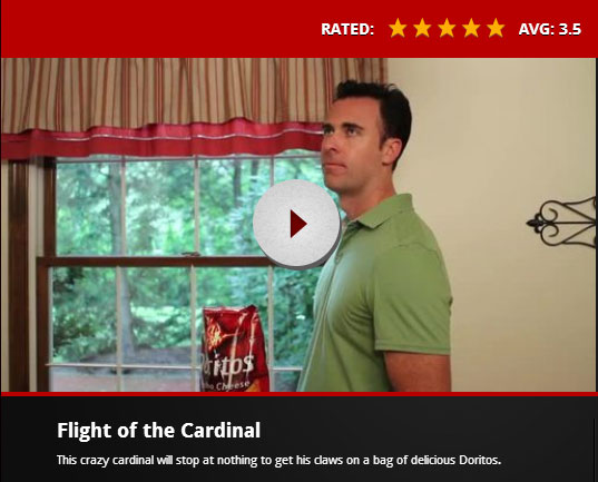 Flight of the Cardinal - Doritos Super Bowl 2013 Commercial by Josiah Williams and Ryan Rossell