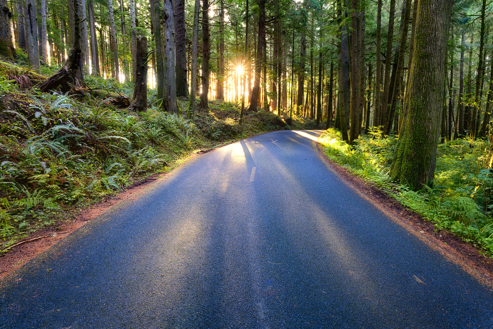 Photo credit: Forest Road in Oregon by Michael Matti, a Creative Commons licensed image on Flickr.