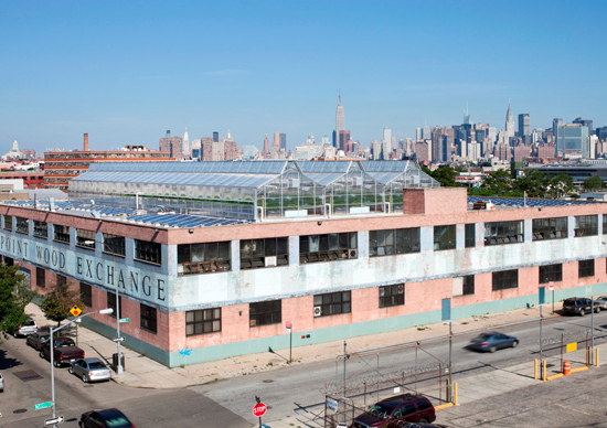 GothamGreens_rooftopfarm-550px.jpg