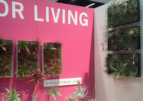 MYD_DwellonDesign_airplants_600x425.jpg
