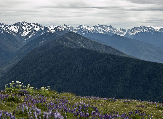 MYD-blog-hurricane-ridge-washington-olympic-park-550x400.jpg