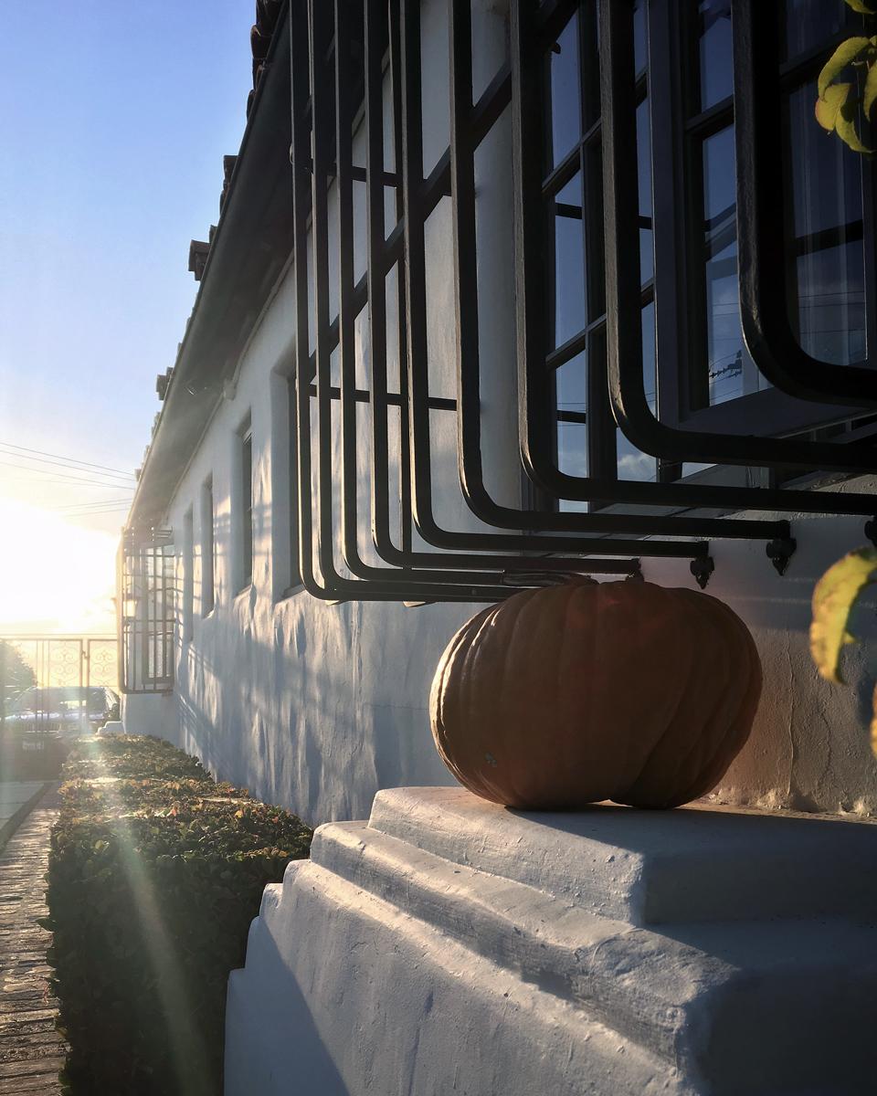 pumpkin + laguna architecture
