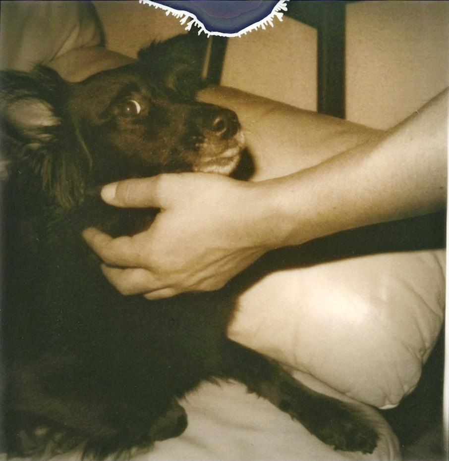dog2_o.jpg