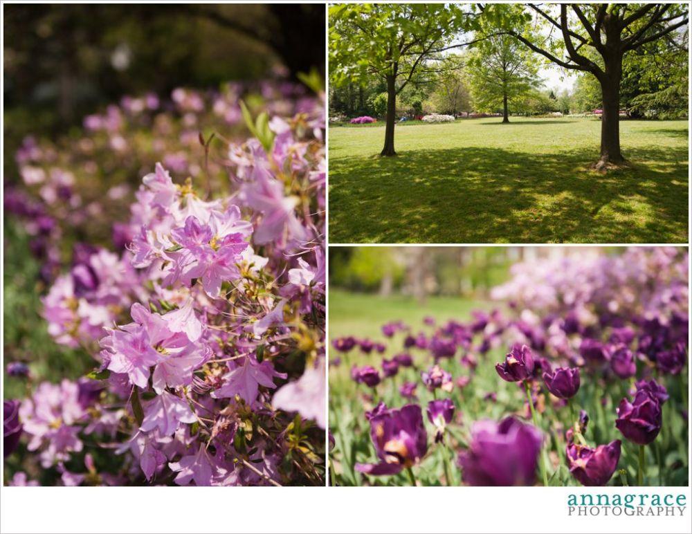 Purple Ravens tulips!