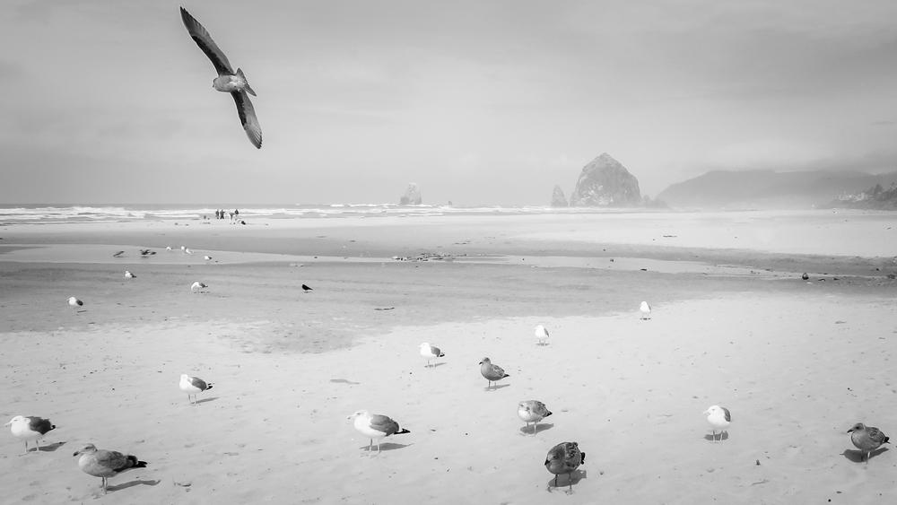 Pete Wright — Armada.jpg