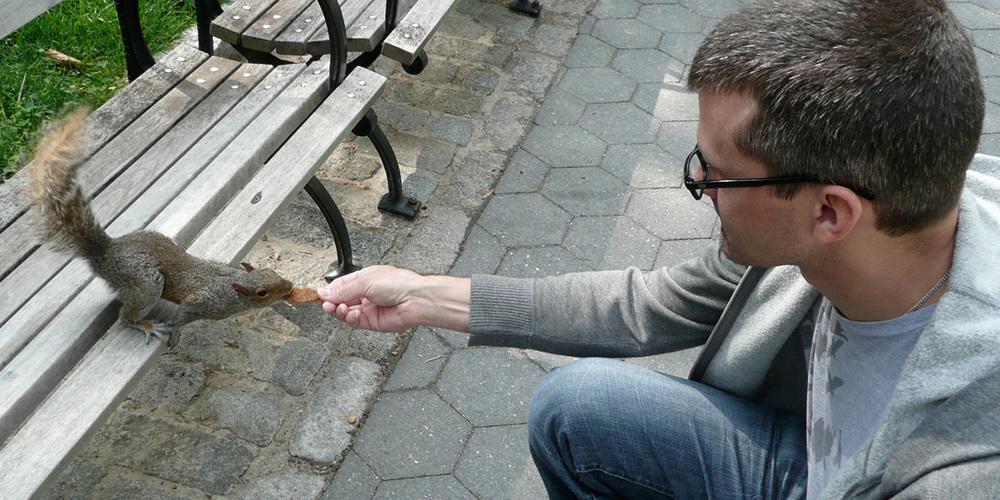 squirreltop-twitterbg.jpg