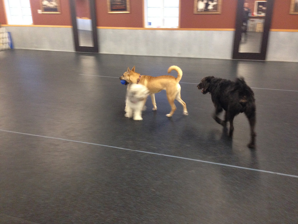 Dogs Playing Rio Gran.jpg