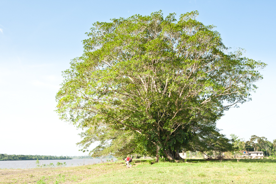 Brazil-Amazon-River-dc-20120905-4856.jpg
