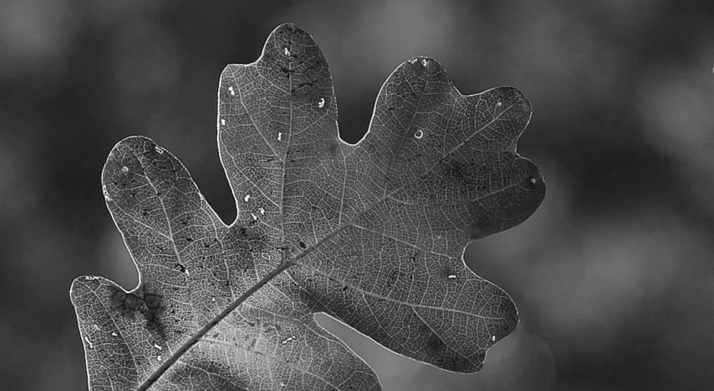 Leaf, Zion National Park by Jon Sullivan