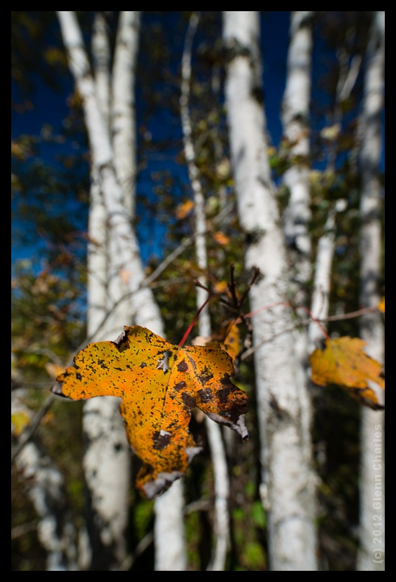 Nikon D800E, Zeiss 21 -- Down East Maine Fall 2012
