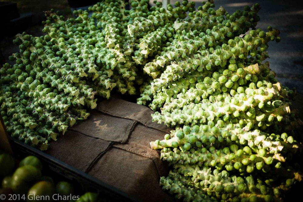 Fresh Brussel Sprouts being served up at the Portland Farmers Market, Portland Maine -- Leica M240, 35/Lux