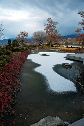 Cold winter temperatures slow down a koi's metabolism - that means no feeding all winter.