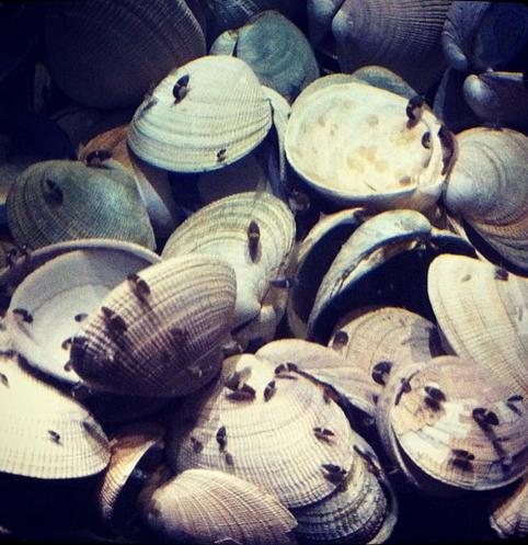 Koi fish diseases exposed koi story for Fish scale disease