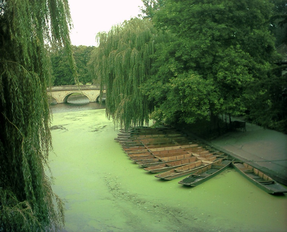 Algae grows rampant in the hot and sunny summertime.