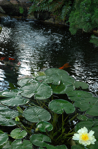 Foliage and pond plants provide shade and protect against excessive algae.
