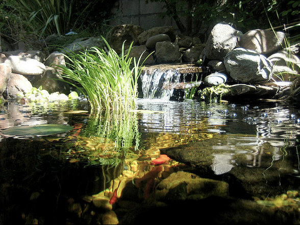 Waterfalls act as a natural form of aeration in the pond.
