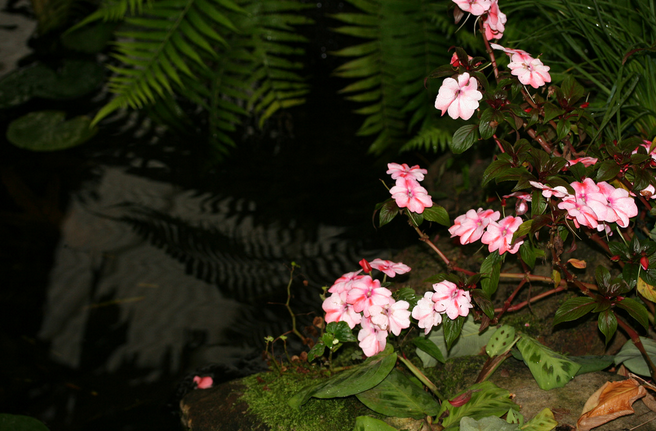 Heavy and large plants can be placed around the edge of the pond to overlook the water.