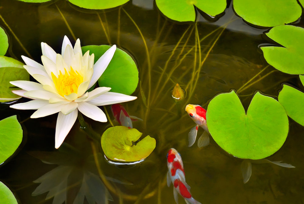 how to keep pond fish alive in winter