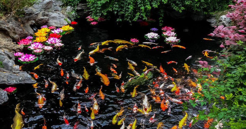 koi-water-quality