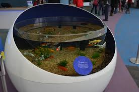 koi aquarium.jpg