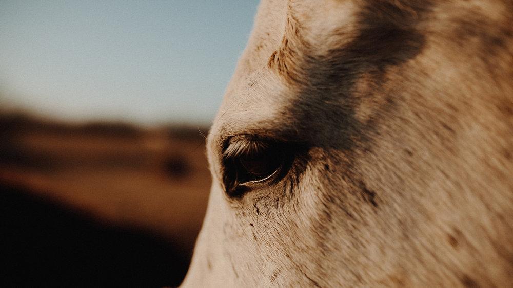 alec_vanderboom_horses_online-0021.jpg