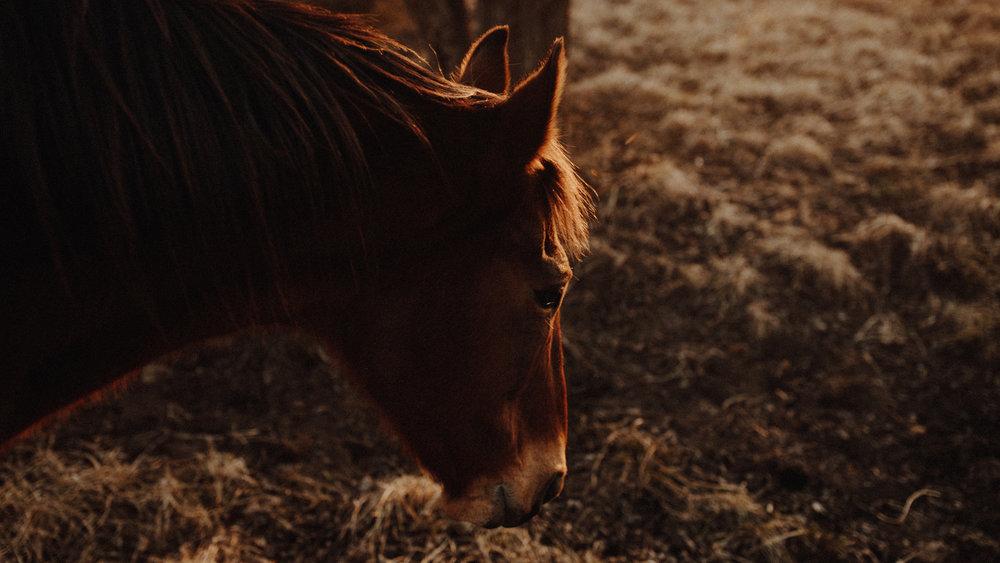 alec_vanderboom_horses_online-0033.jpg