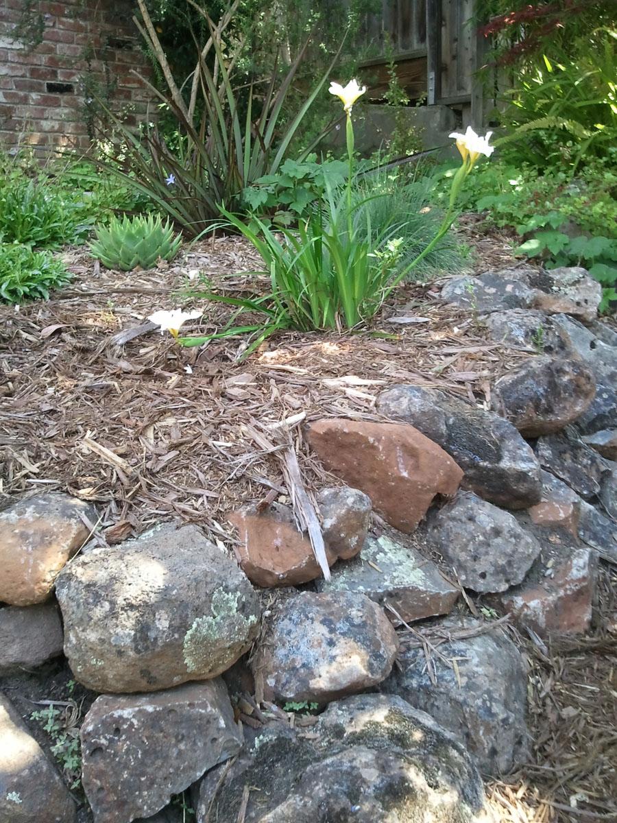 JJ Front Garden Rock Wall Iris