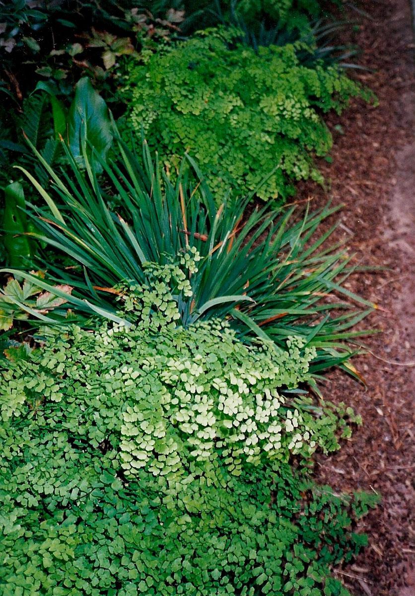 7 MH plants.jpg