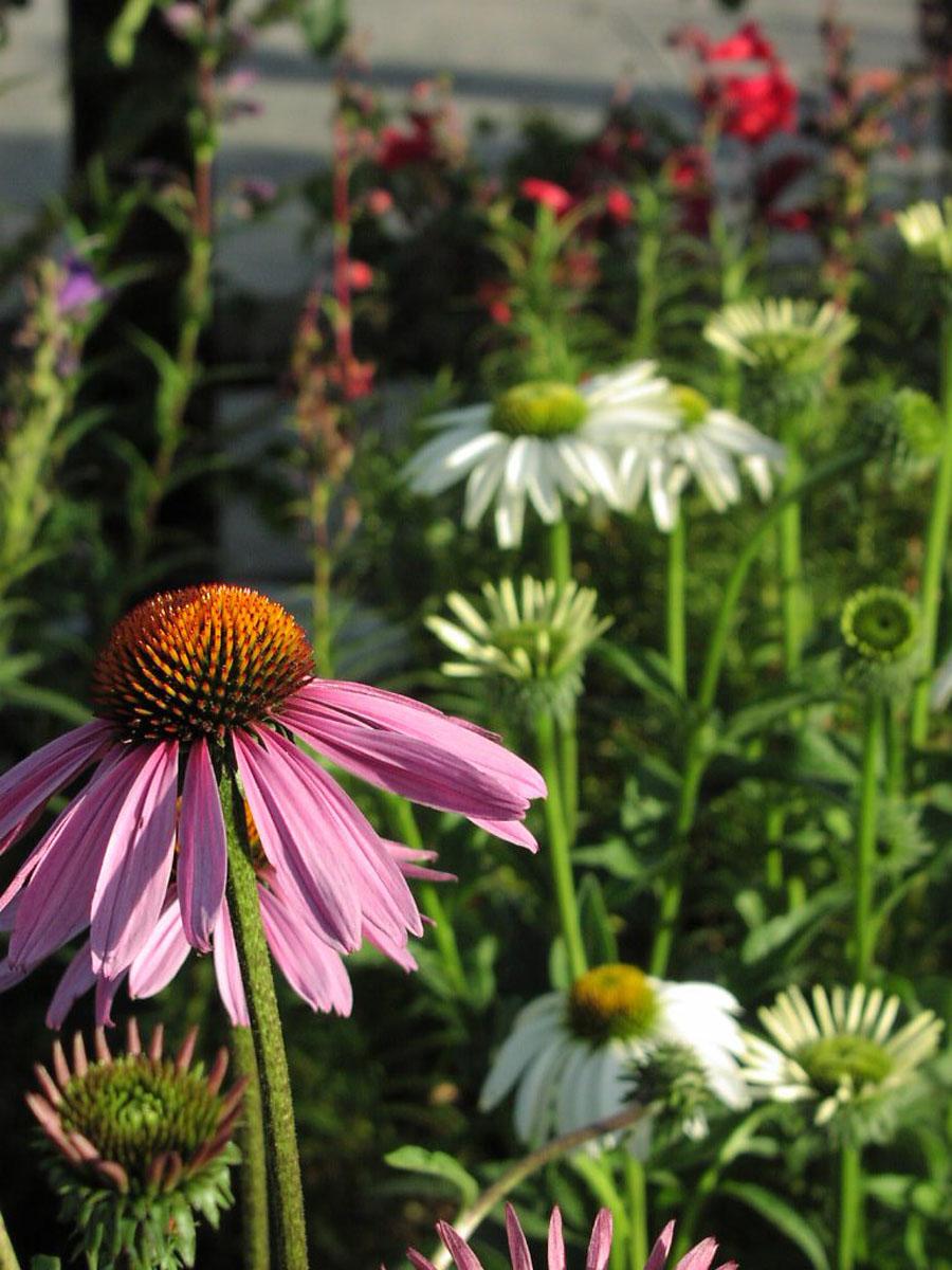 =Risa garden 3.jpg