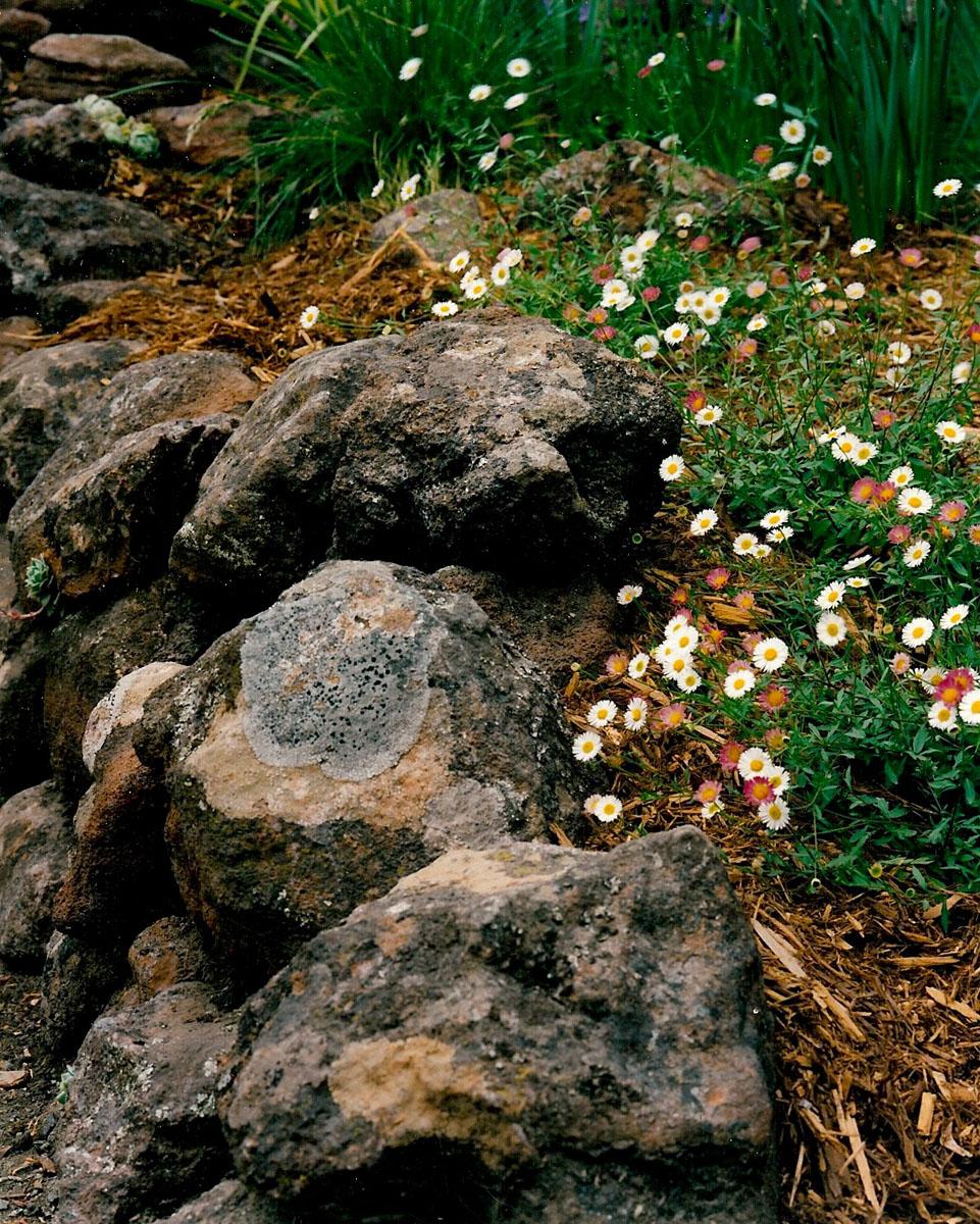 1 JJ front garden  rock wall  mexican fleabane.jpg
