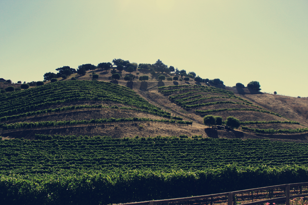 hills-of-truf.jpg