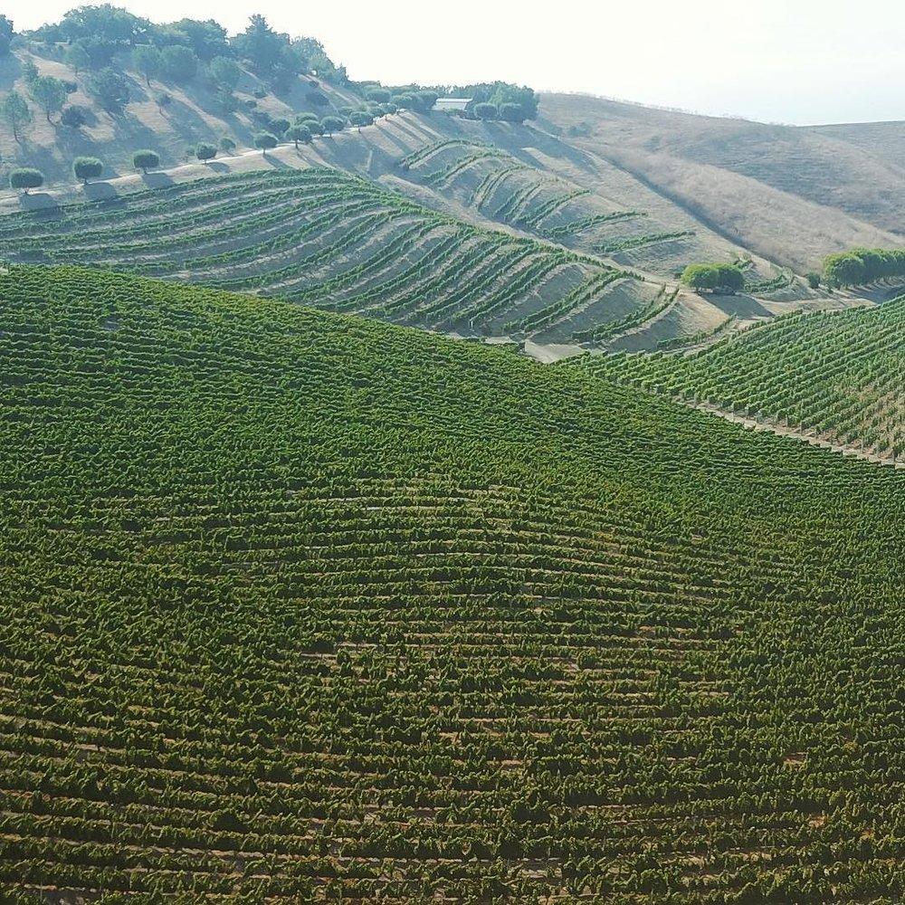 My fault, my failure is not my passions, it is my lack of control over them. ________________________________________________________ #saarloosandsons #saarloosharvest #wine #losolivos #blessthishustle.jpg